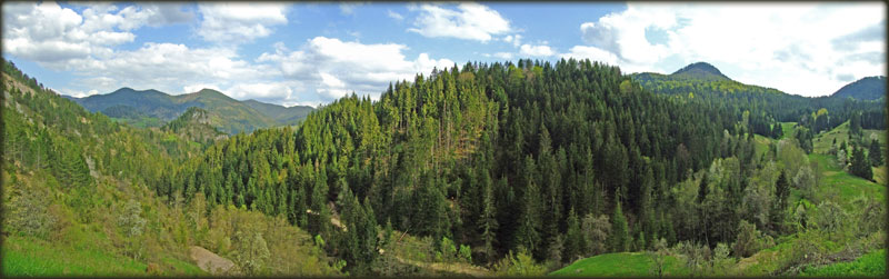 Tipičan tarski pejzaž