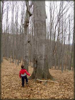 Mihailo - tako mali, a već šumski čovek