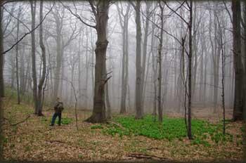 Šume u magli, pune sremuša