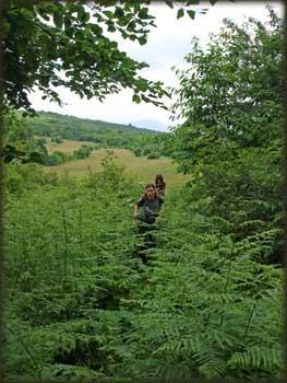 Улазак у шуму са Ковеја