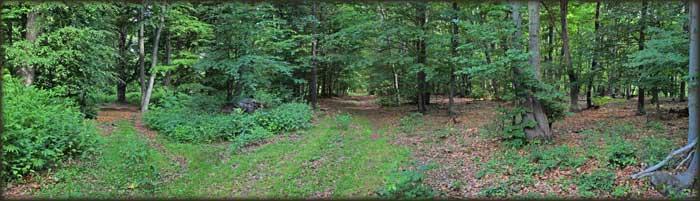 У шумама Малиника...
