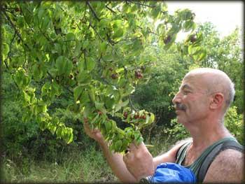 Убирање плодова