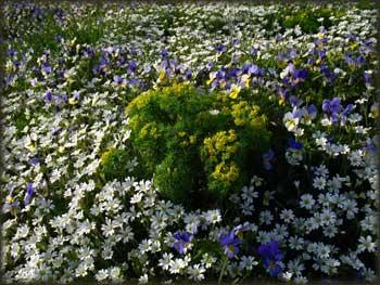 Ботаничка башта Стола