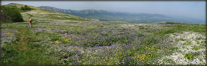 Стол - највећа цвећара под отвореним небом (гребен Великог Крша у позадини)