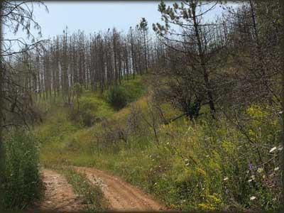 Šuma koja je gorela