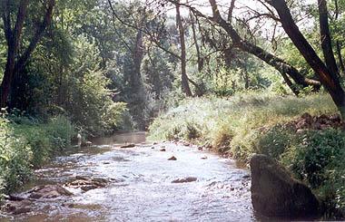 Potok u Gadžinom Hanu (L)