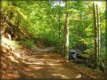 Savršen put kroz šumu, pored reke