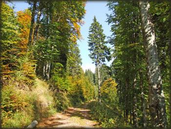 Prelepa šuma na putu ka prevoju obasjana Suncem