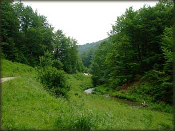 Zelena dolina Kločanice